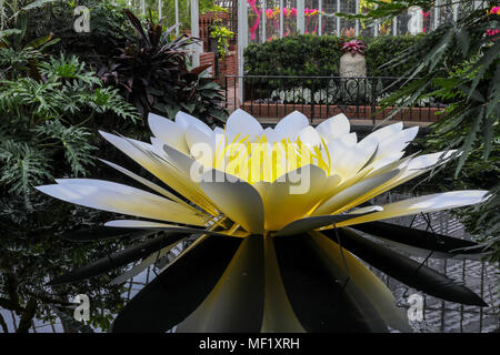 Beautiful, larger than life, vividly colored glass flowers as seen at the Phipps Conservatory Botanical Gardens. - Stock Image