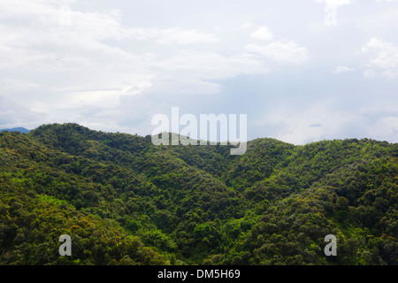 trees and yellow earth in Chinese village - Stock Image