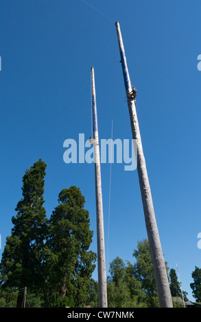 Welsh Open Speed Pole Climbing contestants, Royal Welsh Show 2012, Llanelwedd Builth Wells Wales. - Stock Image