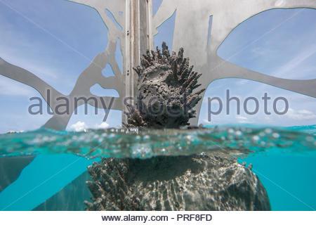 Underwater statue of the Coralarium with coral in Maldives - Stock Image