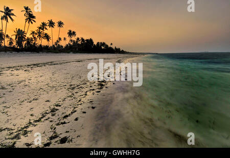 Silhouette of trees reflected on the ocean at sunset on the beach. - Stock Image