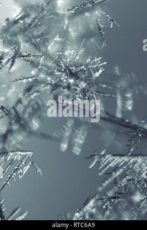 Macro photograph of freshly fallen snowflakes on a cold winter day. - Stock Image