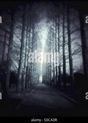 Row of winter trees and path, with a dark, eerie atmosphere like that found in a suspense or mystery novel. Grungy, - Stock Image