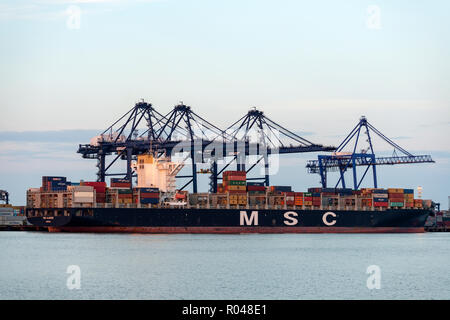 MSC Alghero container ship, port of Felixstowe, Suffolk, England. - Stock Image