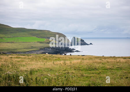 Cows on  Irish countrysiade at West Cork - Stock Image