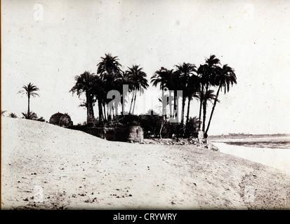 Louksor, Dattiers et Jardin de L'Expedition du Louksor, by Felix Teynard, 1852 - Stock Image