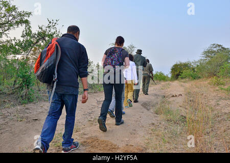 5 am bush -walk to spot wild animals (walk outside the electric fences of the camps,) in single file with two rifle - Stock Image