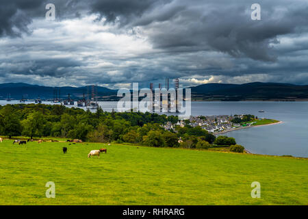 City Of Cromarty With Cattle On Pasture And Oil Rigs In The Cromarty Firth In Scotland - Stock Image
