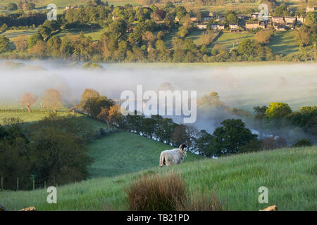 Teesdale, County Durham, UK. 29th May, 2019. UK Weather. It was a bright start to the day with mist affecting some rural areas in County Durham. Credit: David Forster/Alamy Live News - Stock Image