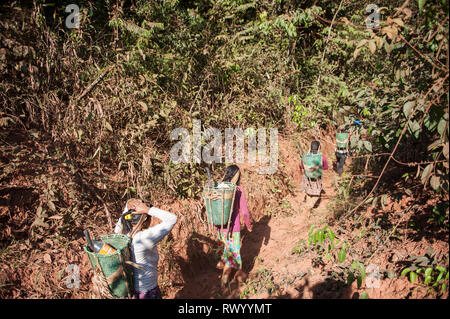 Mato Grosso State, Brazil. Kayapo Indian women with traditional design baskets, but made of plastic binding tape, trek into the rainforest to collect  - Stock Image