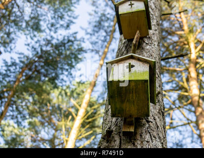 Two old not accepted nesting boxes at the trunk of a pine in the forest - Stock Image
