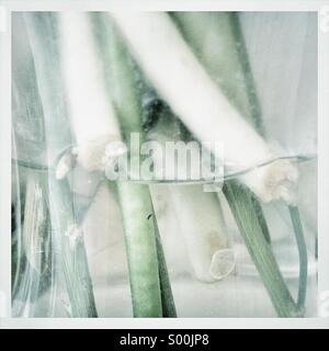 Desaturated close up photo of tulip stems in clear glass vase. - Stock Image