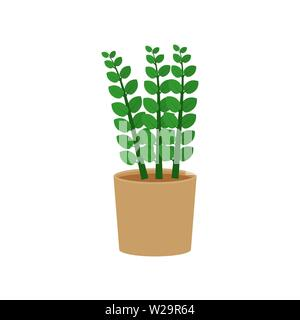 Zamioculcas potted flat icon, indoor plant, flower vector illustration isolated on white background - Stock Image