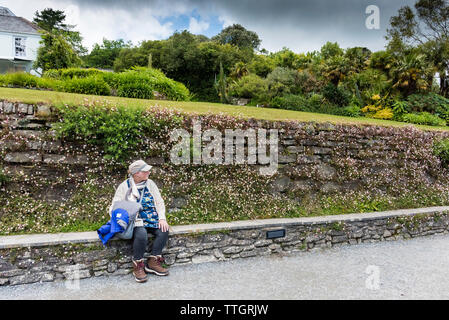 A visitor resting and sitting in front of a rustic wall covered in Erigeron karvinskianus at Trebah Garden in Cornwall. - Stock Image