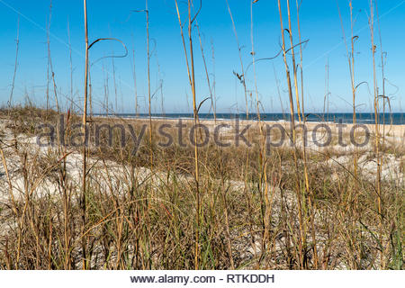 The beach at Anastasia State Park at St Augustine Beach, Florida USA - Stock Image