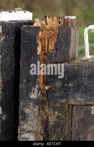 Damaged lock gate after it was hit by a canal narrowboat - Stock Image