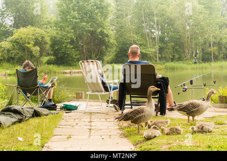 Henlow, Bedfordshire, UK, 28th May 2018. A Dad and his two sons enjoying a fishing session, one boy seems more interested in his electronic device than the fishing. A Canada Goose and goslings wait for discarded bait. Credit: Mick Flynn/Alamy Live News - Stock Image