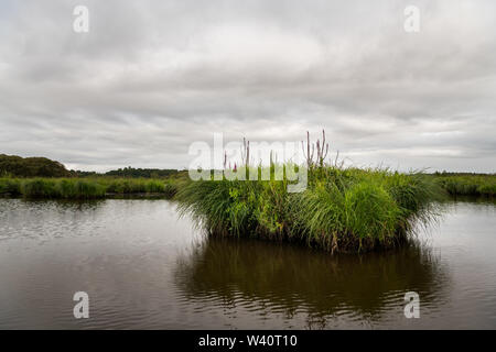 beautiful wetland in the natural park of saint lyphard (France) - Stock Image