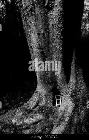 Inhabited tree - Ladder placed inside a tree trunk - Denaturalization - Stock Image