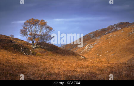 A lone tree in the wilds of the Scottish Highlands, Scotland, UK. - Stock Image