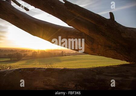 Sun Shining Through a Fallen Tree - Stock Image