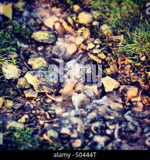 Trickling brook - Stock Image