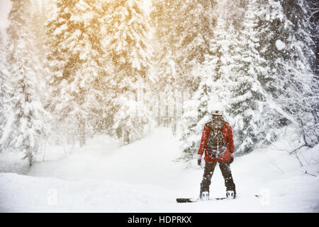 Snowboarder stands snow frozen forest backcountry - Stock Image