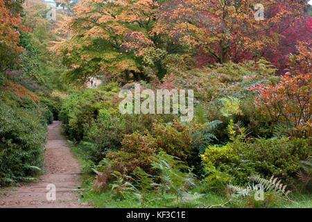 Winkworth Arboretum in autumn, Surrey, England - Stock Image