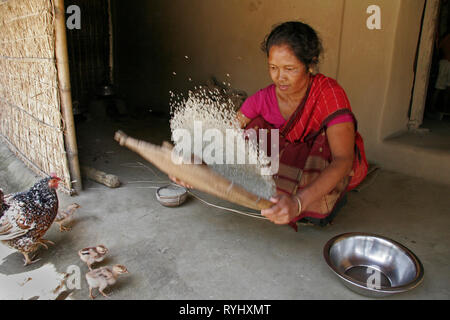 BANGLADESH Alpona Ritchil, a woman of Garo tribal minority cleaning rice before cooking, while chickens look on, Haluaghat, Mymensingh region photo by Sean Sprague - Stock Image