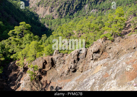 Igneous rock geological stratification from historical lava flows in pine forest, La Palma Island, Canaries, Spain - Stock Image