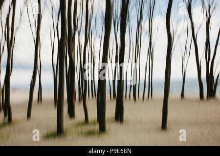 Blurred motion abstract of elm trees with beach and ocean in distance - Stock Image