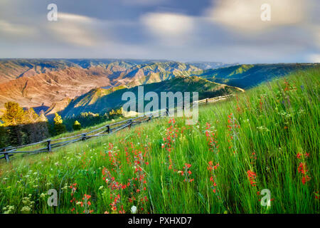 Wildflowers and fence at Buckhorn Overlook. Hell's Canyon National Recreational Area, Oregon - Stock Image