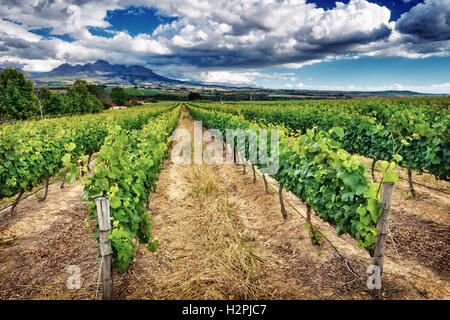Beautiful vineyard landscape, panoramic view on a great vine valley, autumn season, wine industry in South Africa - Stock Image