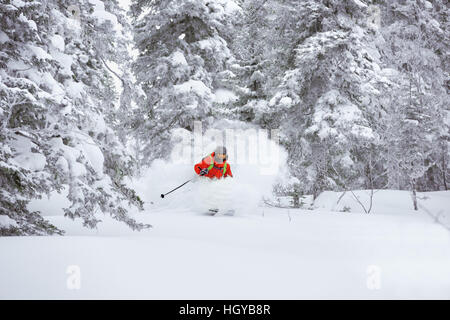 Off-piste skier ski forest freeride - Stock Image