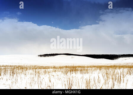 Winter snowscape of wild fields with weeds and large snow clouds and areas of blue sky with nobody in the wintry themed scene and landscape. Large for - Stock Image
