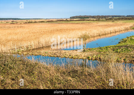 Views of salt marshes surrounded by reeds, from Norfolk Coast path National Trail near Burnham Overy Staithe, East Anglia, England, UK. - Stock Image