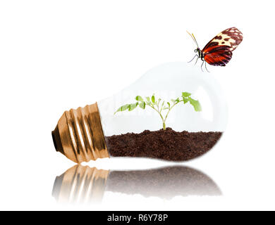 Young seedling growing out of soil inside light bulb with butterfly and copy space. Concept of new life or beginning, environmental conservation, ecol - Stock Image