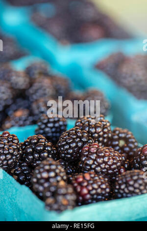 Blackberries for sale at farmers market - Stock Image