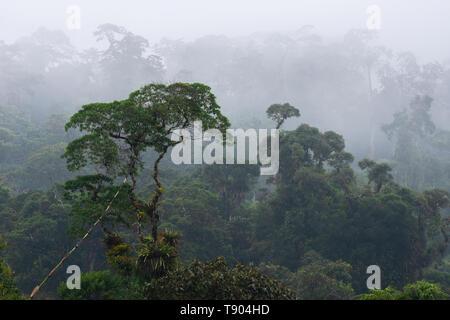Atlantic Rainforest of SE Brazil near Tapiraí, São Paulo - Stock Image