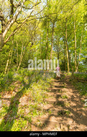 Older woman walking in Houghall woods, Durham City, Co. Durham, England, UK - Stock Image