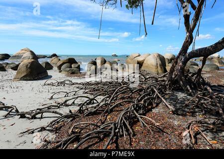 Coastal mangrove trees at Quintell Beach, Lockhart River, Cape York Peninsula, Far North Queensland, FNQ, QLD, Australia - Stock Image