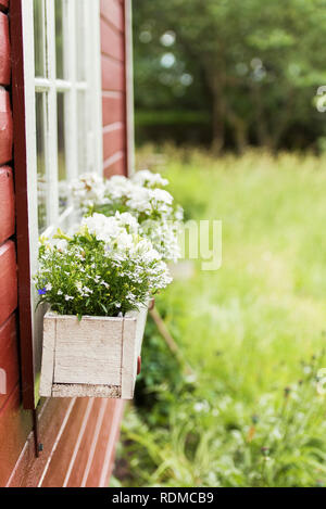 Flowers in wooden pots - Stock Image