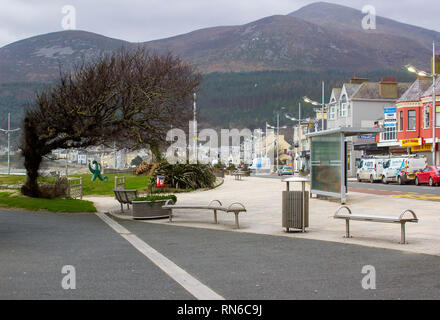 14 December 2018 An ancient widswept tree on the main street outside the town hall in Newcastle County Down Northern Ireland - Stock Image