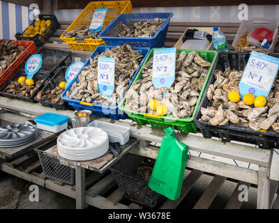 fresh Oysters in baskets on the fish market - Stock Image