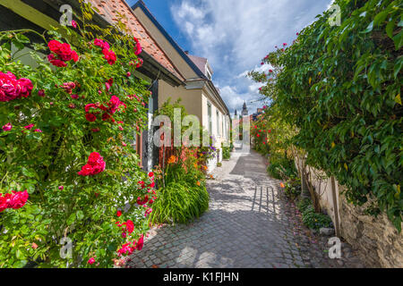 Fiskargränd in old Hansa Town Visby on Gotland island in the Baltic Sea, Sweden - Stock Image