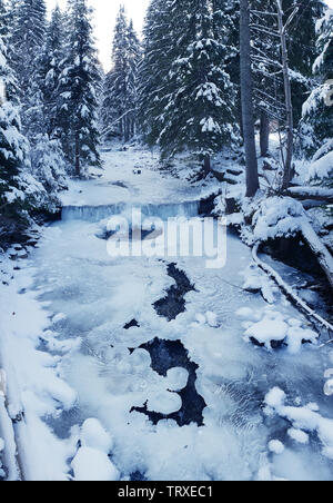 Beautiful winter landscape. Green firs covered with snow and frozen river. - Stock Image