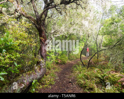 Young man walking on a path in a forest on the Madeira Island, Portugal. - Stock Image