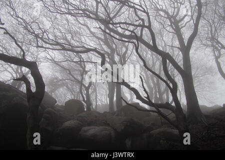 Spooky misty winter woodland scene at Hen Cloud in the Peak District, Derbyshire, England, Great Britain, United - Stock Image