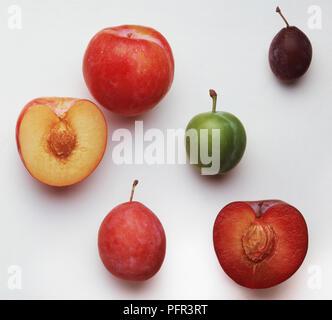 Common Nectarine and Californian Nectarine - Stock Image