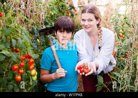Portrait of young woman gardener with son picking tomatoes and holding cultivator  in   greenhouse - Stock Image
